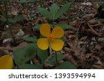 small yellow flower close up.... | Shutterstock . vector #1393594994