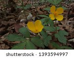 small yellow flowers in the... | Shutterstock . vector #1393594997
