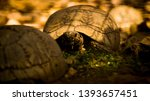 Stock photo tortoise wildlife photos tortoise in jungle beautiful tortoise 1393657451