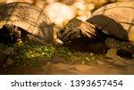 Stock photo tortoise wildlife photos tortoise in jungle beautiful tortoise 1393657454