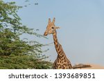 al ain  united arab emirates  ... | Shutterstock . vector #1393689851