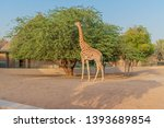 al ain  united arab emirates  ... | Shutterstock . vector #1393689854