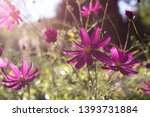 summer story with beautiful...   Shutterstock . vector #1393731884