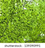 Overhead shot of green leaves - stock photo
