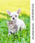 Stock photo chihuahua puppy embracing kitten on green summer grass 1393940141