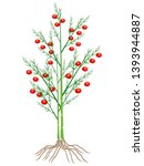 asparagus plant with roots and...   Shutterstock .eps vector #1393944887