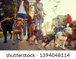 Stock photo group of dogs in the park walking with professional dog walker 1394048114