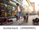 Stock photo dogs on the streets on leash with smiling professional dog walker 1394049851