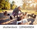 Stock photo smiling professional dog walker in the street with lots of dogs 1394049854