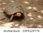 Stock photo elongated tortoise in the nature indotestudo elongata tortoise sunbathe on ground with his 1394129774