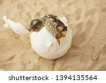 Stock photo  cute portrait of baby tortoise hatching africa spurred tortoise birth of new life closeup of a 1394135564
