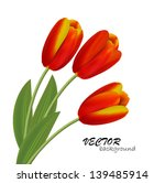 Vector Tulips Isolated On Whit...