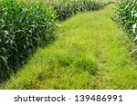 corn farm nature in the... | Shutterstock . vector #139486991