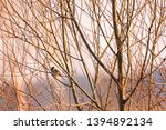 selective focus photo.  the...   Shutterstock . vector #1394892134
