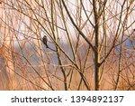 selective focus photo.  the...   Shutterstock . vector #1394892137