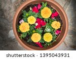 Tagetes Erecta  Yellow Marigold ...