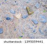 texture of gray stony ground... | Shutterstock . vector #1395059441