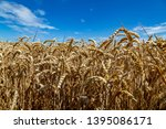 a field with wheat in front of...   Shutterstock . vector #1395086171