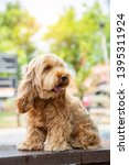 hairy dog. puppy of the... | Shutterstock . vector #1395311924