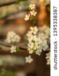blooming plum tree closeup.... | Shutterstock . vector #1395338387