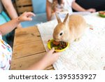Stock photo close up gray baby rabbits month old isolated on a coffee cafe background for children to feed 1395353927