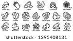 nut icons set. outline set of... | Shutterstock . vector #1395408131