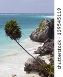 Palm Tree over beach at Tulum Mexico - stock photo
