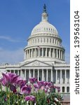 Stock photo us capitol building with tulips foreground in spring washington dc united states 139563104