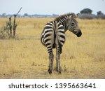 zebra  kruger national park ... | Shutterstock . vector #1395663641