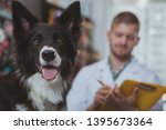 close up of adorable healthy...   Shutterstock . vector #1395673364