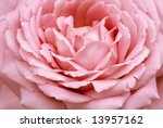 Macro image of pastel pink rose.  Extreme close-up with shallow dof. - stock photo