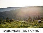 Wild Ponies at Grayson Highlands State Park in Jefferson National Forest in Virginia