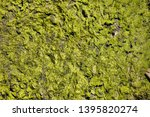 green moss on stones  background | Shutterstock . vector #1395820274