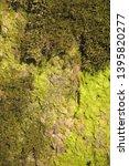 green moss on stones  background | Shutterstock . vector #1395820277