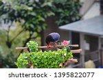 taiwan blue magpie  urocissa...   Shutterstock . vector #1395822077