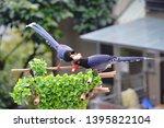 taiwan blue magpie  urocissa...   Shutterstock . vector #1395822104