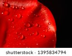 close up of a leaf of red tulip ... | Shutterstock . vector #1395834794