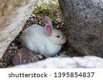 closeup white rabbit hide among ... | Shutterstock . vector #1395854837
