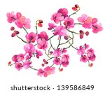 pink orchid | Shutterstock . vector #139586849