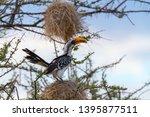 eastern yellow billed hornbill  ... | Shutterstock . vector #1395877511