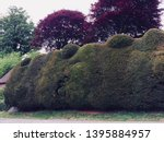 A Box Tree Hedge Sculpted Into...