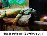 lizard relaxing on wooden log | Shutterstock . vector #1395995894