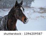 equine in the snow head shot | Shutterstock . vector #1396209587