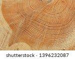 freshly cut tree trunk  closeup ... | Shutterstock . vector #1396232087