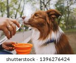 Dog Is Drinking Water From The...