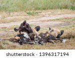 pack of rare african wild dogs... | Shutterstock . vector #1396317194