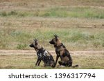 pair of rare african wild dogs  ... | Shutterstock . vector #1396317794