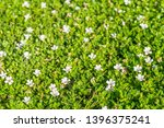 spring background with small... | Shutterstock . vector #1396375241