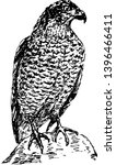 Eagle  Predatory Bird. Vector...