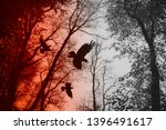 Crows Flying In Forest Between...